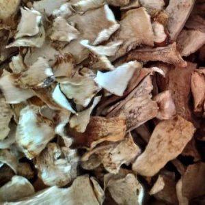 koren borowik